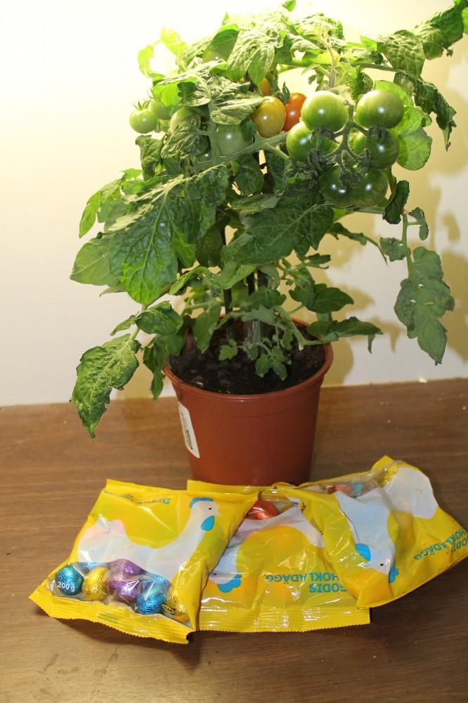Tomatplante og godteri fra IKEA