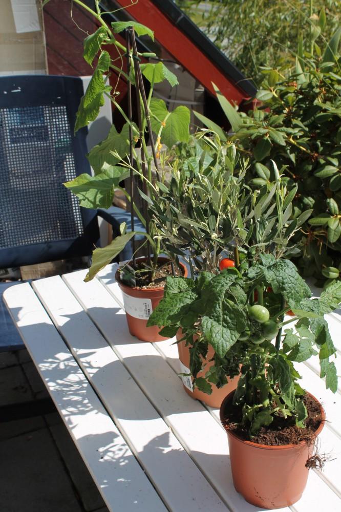 Agurk,oliven og tomat fra IKEA