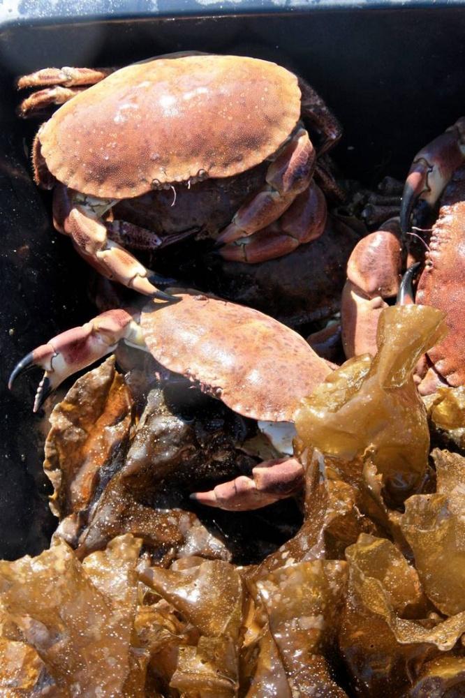 Slik så det ut i kassene til krabbeselgerne.